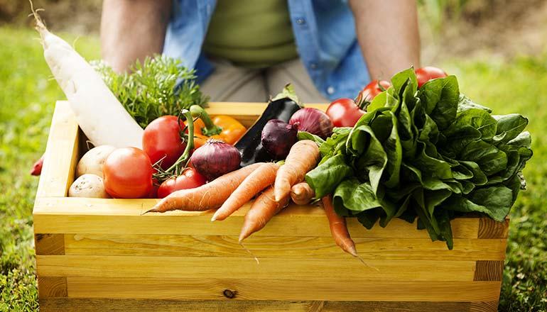 Eat healthy-The food pyramid