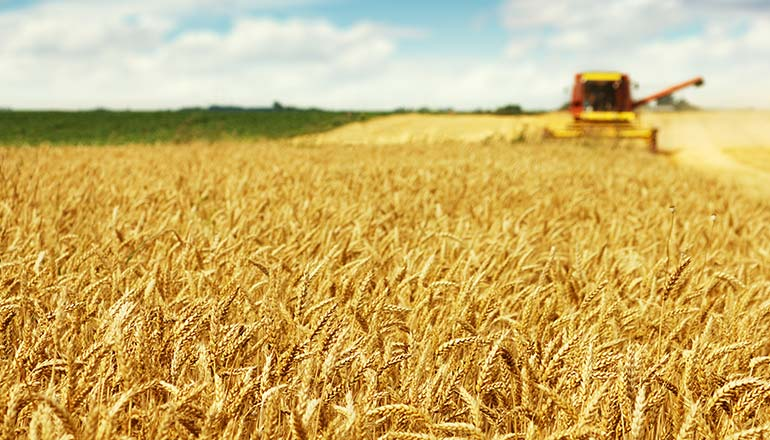 Freeze Concern Hits Wheat Farms